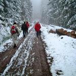 winterwalk in the snow