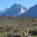 Guanacos and the view