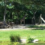 Fort Worth Zoo Image