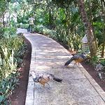 Birds on Walkway