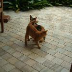 Oberoi Cats