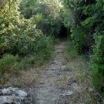 Hidden hiking trail off upper field
