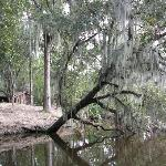 Swamp Tour's are available