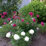 Summer flowers in bloom