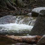 View of a creek near Idyllwild