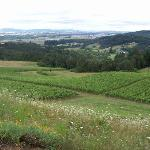 Youngberg vineyards and beyond