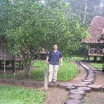 Lime tree among the cabins