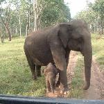 Safest Place For a Baby Elephant