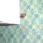 bug problem