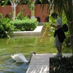 Swans in lobby area