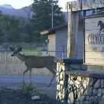 Mule Deer at twilight at the Inn