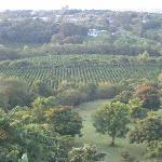 Coffee Plantation on Premesis
