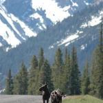 Moose saying goodbye as we left