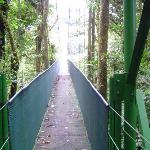Sky walk at Monteverde