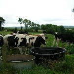 cows and farms are the main sights you see...