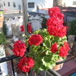 Flowers on balcony...