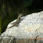 Lots of gecko lizards
