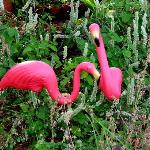 Flamingos are an appropriate decoration on the motel grounds