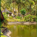 Pool & palm