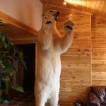Polar Bear in Reception area