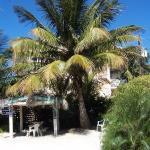 tiki hut and coconut tree