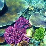 coral and sealife dazzles