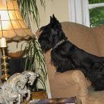 Ruth & Rex's adorable Scottie