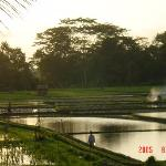 moody view of ricefields