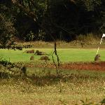 Baboons on Aberdares Golf course