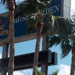 Palms Gently Wave Around the Best Western Sign