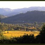 Late afternoon in Napa Valley