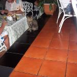 kitty cat sits by your table every day