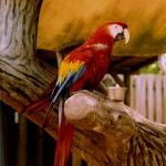 Tropical Bird from in the aviary!