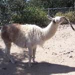 Another Llama