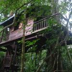 Treehouse 3, Our Jungle House