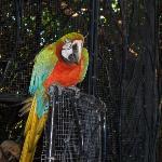 A friendly parrot