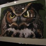 Picture of an owl in the elevator