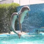 dolphin show at the zoomarine