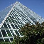 Rainforest Pyramid