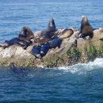 Stone Island tour