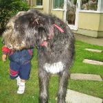 Gus with Clancy the Wolfhound
