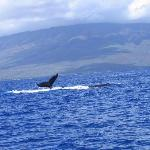 photo from PWF Whale watching tour