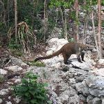 we saw this fellow at the 1st cenote