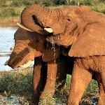 Elephants at the Water Hole