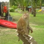 Another monkey