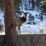 I Hope the Elk Have a Reservation!