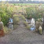 Papyrus Grove