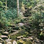 Trail to Carlo Col