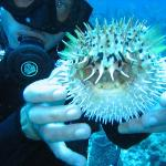 Chad and a pufferfish