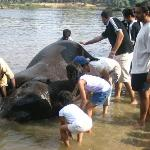 Visit a nearby elephant 'resort' and bathe the elephants!